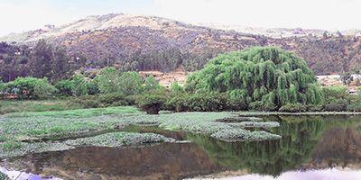 humedales-de-huasao-cusco